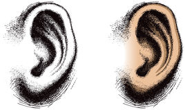 Illustrated Human Ear. An illustration of a human ear Royalty Free Stock Images