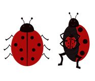 Illustrated Ladybugs Stock Photos