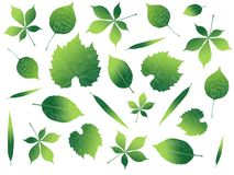 Illustrated leafs in many shapes Royalty Free Stock Photos