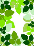 Illustrated leaves forming the frame. Stock Images