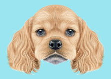 Illustrated portrait of American Cocker Spaniel puppy Royalty Free Stock Photography