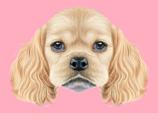Illustrated portrait of American Cocker Spaniel puppy Stock Images