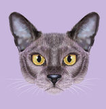 Illustrated Portrait of Burmese cat. royalty free illustration
