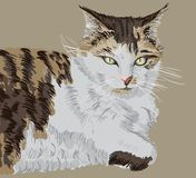 Illustrated portrait of a cat Royalty Free Stock Photography