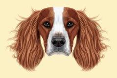 Illustrated Portrait of English Springer Spaniel dog Stock Images