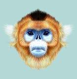 Illustrated Portrait of Golden snub-nosed monkey Stock Image