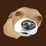 Illustrated  portrait of a little dog Stock Images
