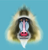Illustrated portrait of Mandrill monkey. Cute fluffy face of primate on blue background Stock Images
