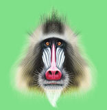 Illustrated portrait of Mandrill monkey. Cute fluffy face of primate on green background Stock Photo