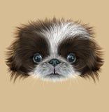 Illustrated Portrait of Pekingese Dog Stock Images
