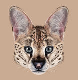 Illustrated Portrait of Serval Stock Photos