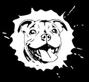 Illustrated portrait of staffordshire bull terrier puppy. Original black and white computer illustration of cute staffordshire bull terrier puppy head in spot Royalty Free Stock Photography