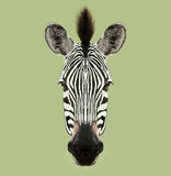 Illustrated Portrait of Zebra. Stock Photography