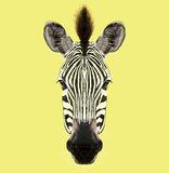 Illustrated Portrait of Zebra. Royalty Free Stock Photography