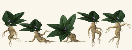Illustrated posing plant root. Illustration of five dancing or posing plant root characters in the shape of human figures with leaves as heads Stock Photography