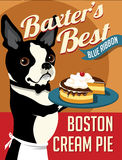 Illustrated poster of a Boston Terrier dog Stock Image