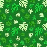 Illustrated seamless abstract pattern with green monstera leaves. Repeat pattern, wallpaper Vector Illustration