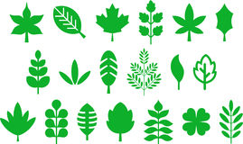 Set of different green leaves Stock Photography