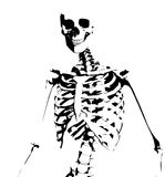 Illustrated Skeleton. Image of an illustrated skeleton for medical or Halloween concepts Royalty Free Stock Image