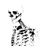 Illustrated Skeleton Royalty Free Stock Photos