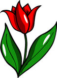 Illustrated tulip Royalty Free Stock Images