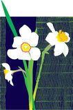Illustrated white daffodils Stock Image