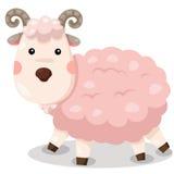 Illustrateur de vecteur mignon de chèvre Images libres de droits