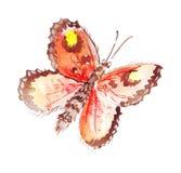 Illustratie hand-drawn vlinders van verschillende patronen Stock Afbeelding