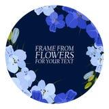 Illustratie met blauwe bloemen, ridderspoor met donkere cirkels Stock Fotografie