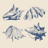Illustratie met blauwe shells Stock Afbeelding