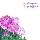Illustratie met bloeiende ranunculus Stock Afbeelding