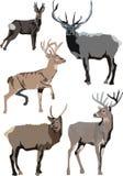 Illustratie met deers Stock Foto