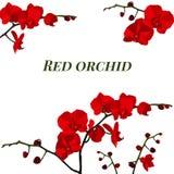 Illustratie met rode orchidee Royalty-vrije Stock Afbeelding