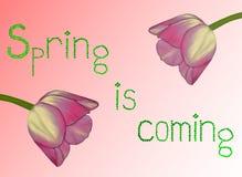 Illustratie met tulpen en woorden Stock Fotografie