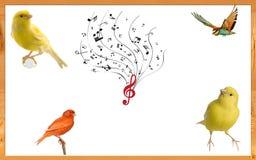 Illustratie met vogels royalty-vrije illustratie
