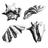 Illustratie met zeeschelpen Stock Afbeeldingen