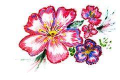 Illustratie rode blauwe bloemen Royalty-vrije Stock Afbeelding