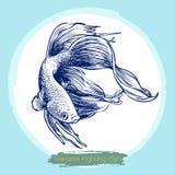 Illustratie van Betta splendens, Siamese het vechten vissen Stock Foto's