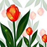 Achtergrond van tulpen Royalty-vrije Stock Afbeeldingen