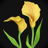 Illustratie van calla leliebloem en groene bladeren stock illustratie