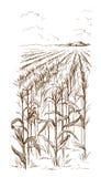 Illustratie van cornfield de schets van de korrelsteel vector illustratie