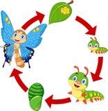 Illustratie van de cyclus van het vlinderleven vector illustratie