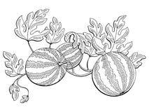 Illustratie van de de installatie zwarte wit geïsoleerde schets van de watermeloen de grafische struik stock illustratie
