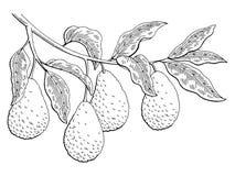 Illustratie van de de tak zwarte wit geïsoleerde schets van het avocadofruit de grafische Stock Afbeelding