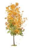 illustratie van de herfstboom Stock Foto's