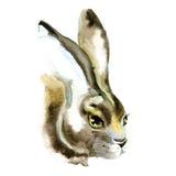 Illustratie van de konijn de hand geschilderde die waterverf op witte achtergrond wordt geïsoleerd Stock Afbeeldingen