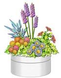Illustratie van de Planter van de lente de Bloemen Royalty-vrije Stock Afbeeldingen
