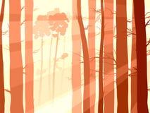 Illustratie van dennenbosbos met zonstralen. Stock Foto's