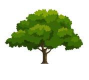 Illustratie van een boom Stock Illustratie