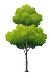 Illustratie van een boom Royalty-vrije Illustratie